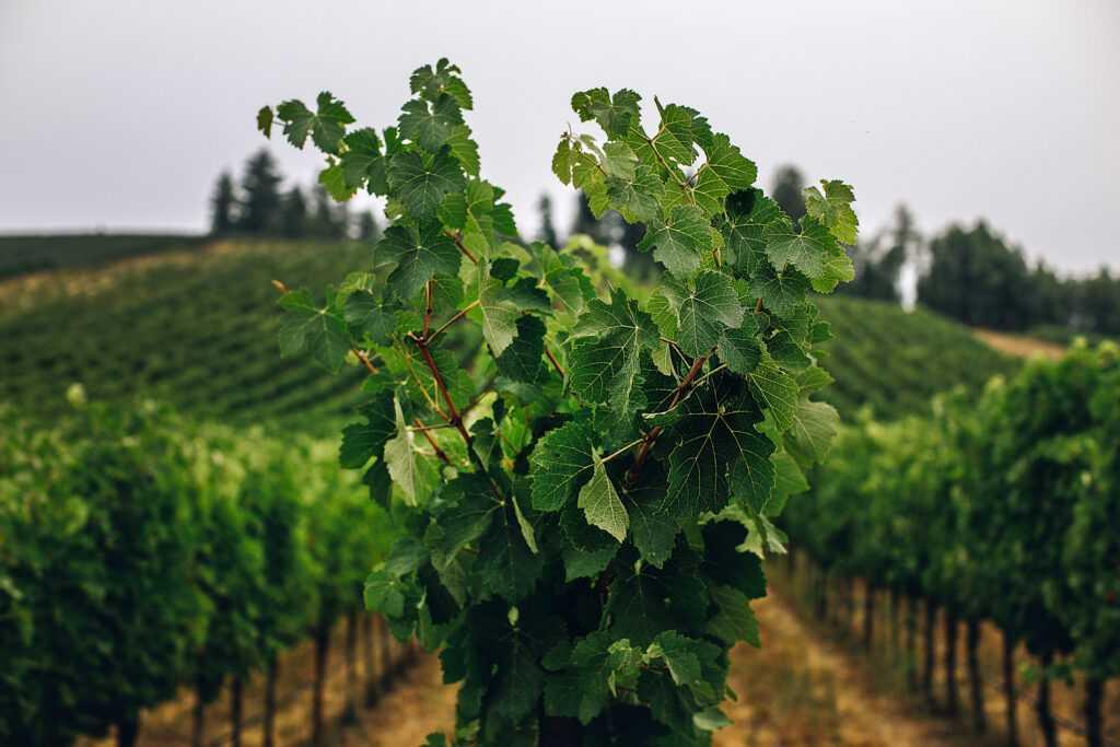 vines up close