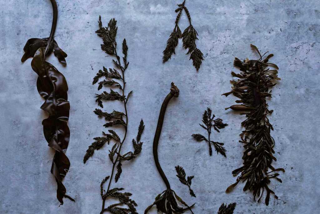 seaweed drying