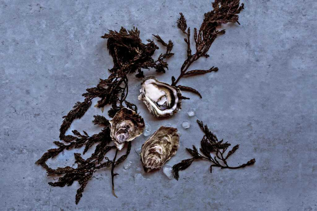 seaweed and oyster shells