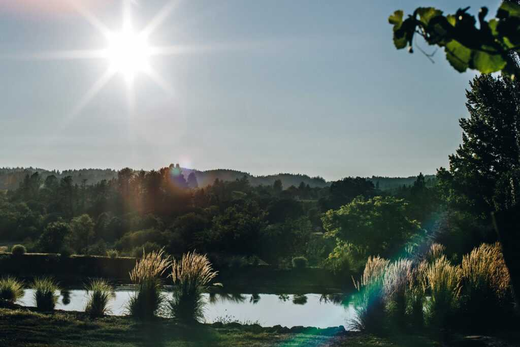 low sun over pond in vineyard