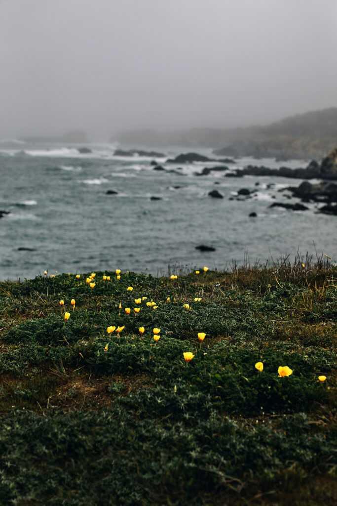 yellow flowers at seashore