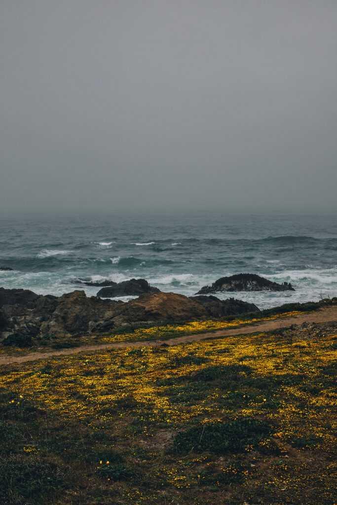 golden shore, ocean