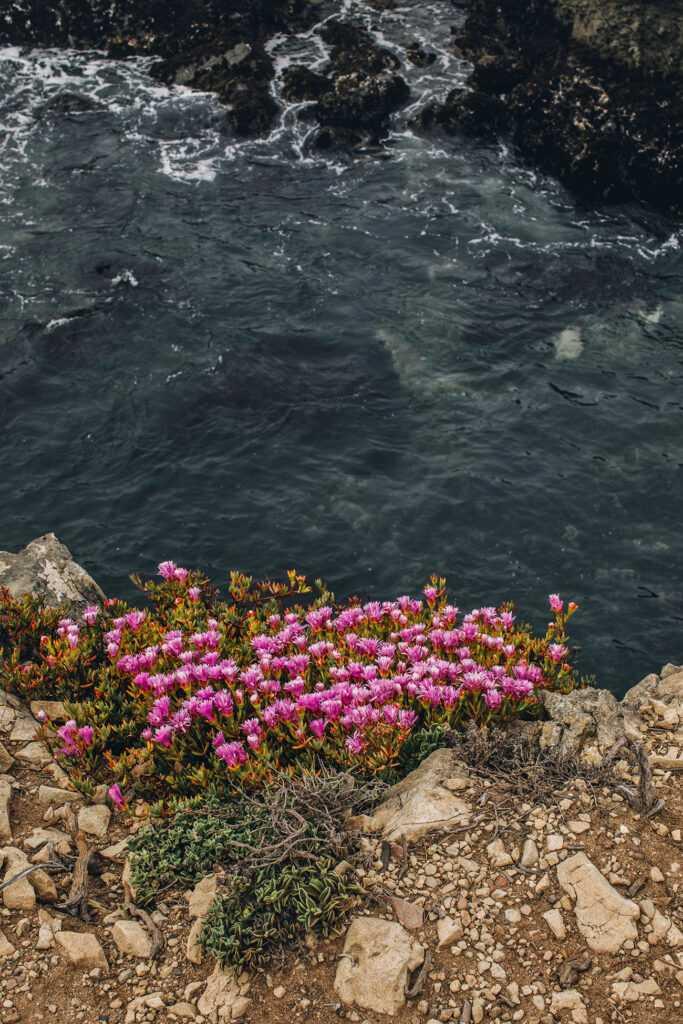 pink flowers over ocean