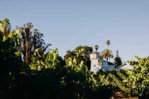 Kobler Family Vineyard